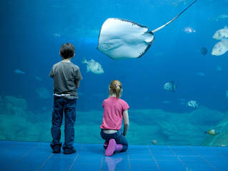 National Marine Aquarium © National Marine Aquarium