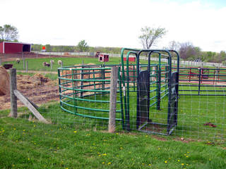 Dominon's Petting Farm in Ann Arbor, MI © ellenm1