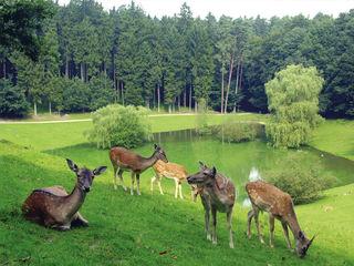 © Wildpark Schwarze Berge