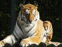 Parkübersicht: Tier- und Freizeitpark Thüle