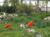 Vogelpark Biebesheim © Vogelpark Biebesheim